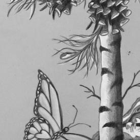 birch tree, butterfly, pine cones
