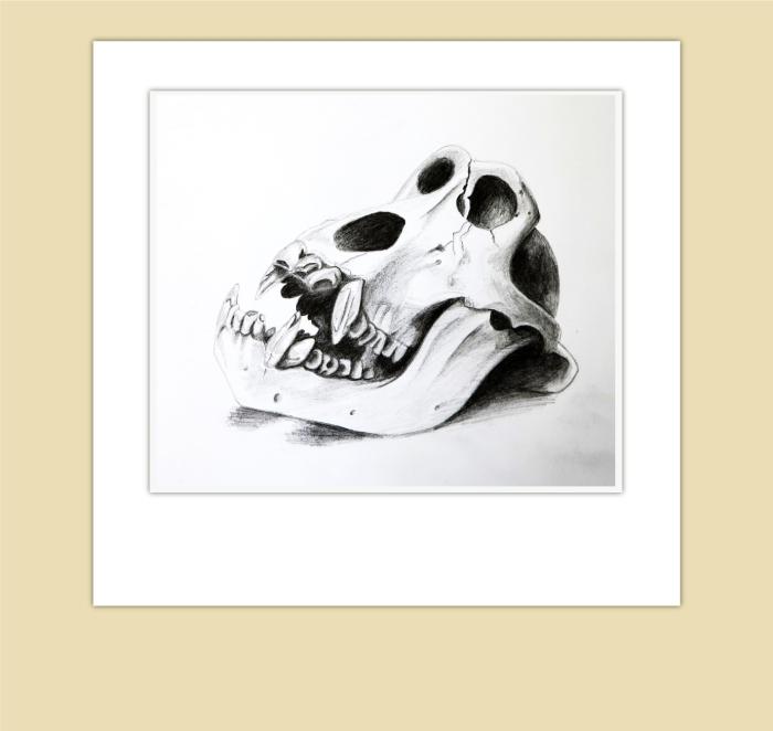 gorilla-skull